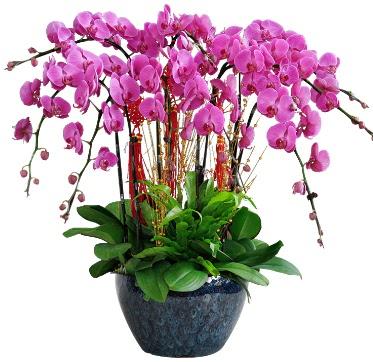 9 dallı mor orkide  Diyarbakır çiçek , çiçekçi , çiçekçilik