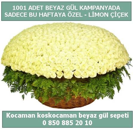 1001 adet beyaz gül sepeti özel kampanyada  Diyarbakır uluslararası çiçek gönderme