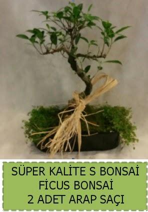Ficus S Bonsai ve arap saçı  Diyarbakır hediye sevgilime hediye çiçek