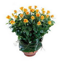 Diyarbakır çiçekçi telefonları  10 adet sari gül tanzim cam yada mika vazoda çiçek