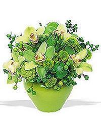 cam yada mika vazoda 5 adet orkide   Diyarbakır online çiçek gönderme sipariş