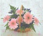gerbera çiçeklerinde sepet   Diyarbakır 14 şubat sevgililer günü çiçek