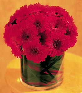 Diyarbakır çiçek mağazası , çiçekçi adresleri  23 adet gerbera çiçegi sade ve sik cam içerisinde