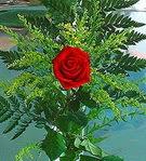 1 adet kirmizi gül buketi   Diyarbakır çiçek gönderme sitemiz güvenlidir