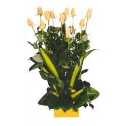 12 adet beyaz gül aranjmani  Diyarbakır çiçekçiler
