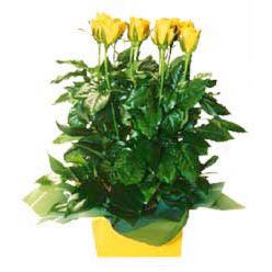 11 adet sari gül aranjmani  Diyarbakır online çiçek gönderme sipariş
