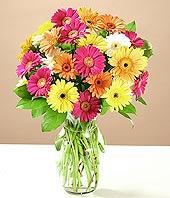 Diyarbakır çiçekçi mağazası  17 adet karisik gerbera