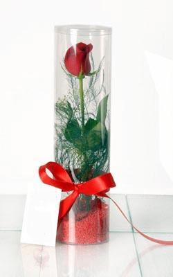 Diyarbakır 14 şubat sevgililer günü çiçek  Silindir vazoda tek kirmizi gül