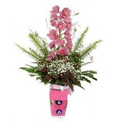 Diyarbakır kaliteli taze ve ucuz çiçekler  cam yada mika vazo içerisinde tek dal orkide çiçegi