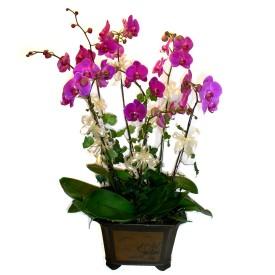Diyarbakır çiçek gönderme  4 adet orkide çiçegi