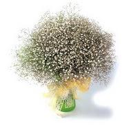 Diyarbakır internetten çiçek satışı  cam yada mika vazo içerisinde cipsofilya demeti