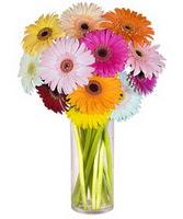 Diyarbakır İnternetten çiçek siparişi  Farkli renklerde 15 adet gerbera çiçegi