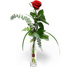 Diyarbakır çiçek , çiçekçi , çiçekçilik  Sana deger veriyorum bir adet gül cam yada mika vazoda
