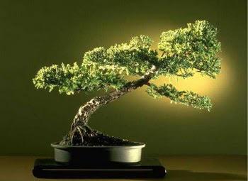 ithal bonsai saksi çiçegi  Diyarbakır güvenli kaliteli hızlı çiçek