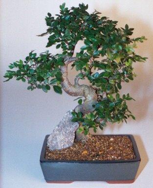 Diyarbakır uluslararası çiçek gönderme  ithal bonsai saksi çiçegi  Diyarbakır yurtiçi ve yurtdışı çiçek siparişi