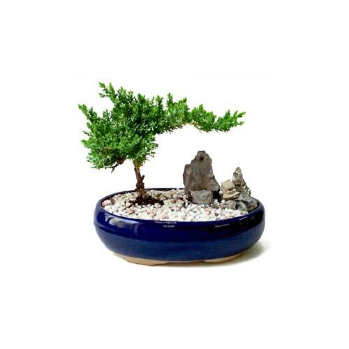 ithal bonsai saksi çiçegi  Diyarbakır anneler günü çiçek yolla