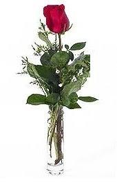 Vazo içerisinde 1 adet kirmizi gül  Diyarbakır çiçekçi telefonları