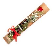1 adet kirmizi gül  Diyarbakır hediye sevgilime hediye çiçek