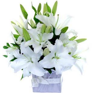 Diyarbakır 14 şubat sevgililer günü çiçek  2 dal cazablanca vazo çiçeği