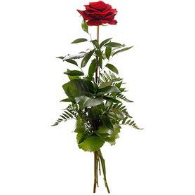 Diyarbakır online çiçek gönderme sipariş  1 adet kırmızı gülden buket