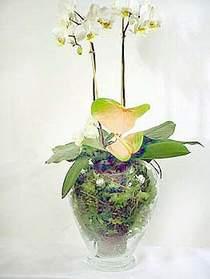Diyarbakır çiçek online çiçek siparişi  Cam yada mika vazoda özel orkideler