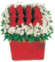 Diyarbakır anneler günü çiçek yolla  Kare cam yada mika içinde kirmizi güller - anneler günü seçimi özel çiçek