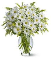 Vazo içerisinde beyaz krizantem çiçekleri  Diyarbakır güvenli kaliteli hızlı çiçek