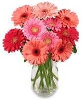 vazo içerisinde 13 adet gerbera çiçeği  Diyarbakır yurtiçi ve yurtdışı çiçek siparişi