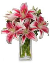 Vazo içerisinde 5 dal kazablanka çiçeği  Diyarbakır çiçekçi telefonları