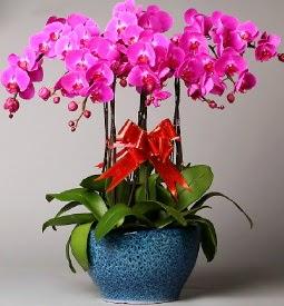 7 dallı mor orkide  Diyarbakır çiçekçi mağazası