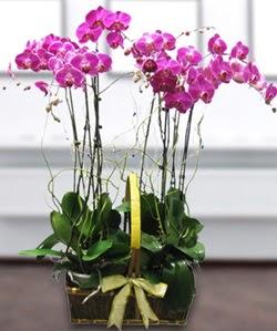 4 dallı mor orkide  Diyarbakır internetten çiçek siparişi