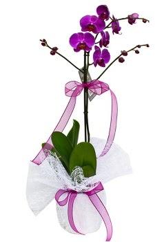 Tek dallı mor orkide  Diyarbakır hediye sevgilime hediye çiçek