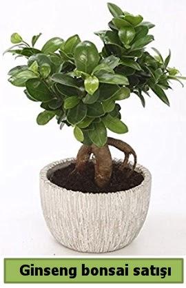 Ginseng bonsai japon ağacı satışı  Diyarbakır hediye sevgilime hediye çiçek