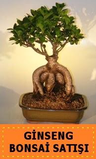 Ginseng bonsai satışı japon ağacı  Diyarbakır çiçek gönderme