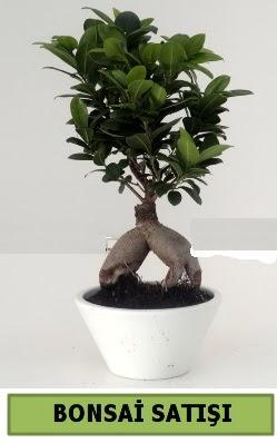 Bonsai japon ağacı satışı  Diyarbakır çiçek siparişi sitesi