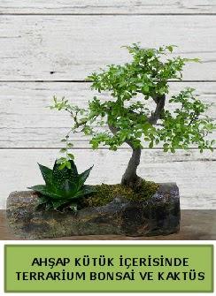 Ahşap kütük bonsai kaktüs teraryum  Diyarbakır İnternetten çiçek siparişi