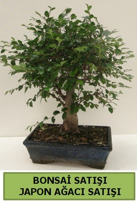 Minyatür bonsai japon ağacı satışı  Diyarbakır uluslararası çiçek gönderme