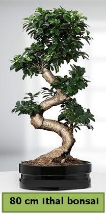 80 cm özel saksıda bonsai bitkisi  Diyarbakır hediye sevgilime hediye çiçek