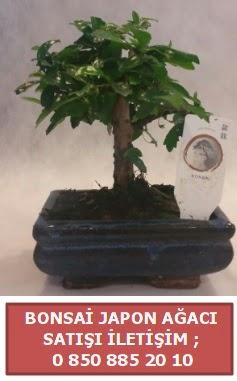 Japon ağacı minyaür bonsai satışı  Diyarbakır çiçek online çiçek siparişi