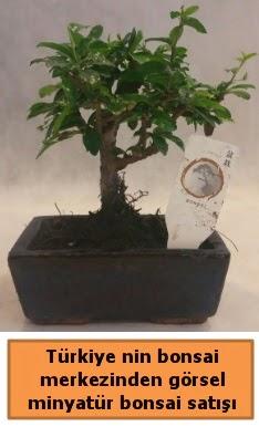 Japon ağacı bonsai satışı ithal görsel  Diyarbakır 14 şubat sevgililer günü çiçek