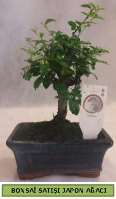 Minyatür bonsai ağacı satışı  Diyarbakır anneler günü çiçek yolla