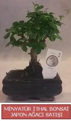 Küçük görsel bonsai japon ağacı bitkisi  Diyarbakır çiçek servisi , çiçekçi adresleri