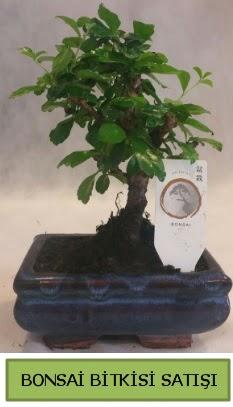 Bonsai ithal görsel minyatür japon ağacı  Diyarbakır çiçek mağazası , çiçekçi adresleri