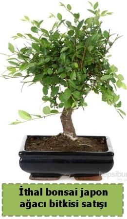 İthal bonsai saksı çiçeği Japon ağacı satışı  Diyarbakır cicekciler , cicek siparisi