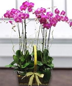 7 dallı mor lila orkide  Diyarbakır uluslararası çiçek gönderme