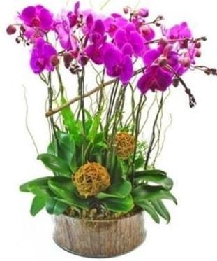 Ahşap kütükte lila mor orkide 8 li  Diyarbakır online çiçekçi , çiçek siparişi