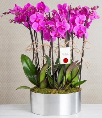 11 dallı mor orkide metal vazoda  Diyarbakır uluslararası çiçek gönderme