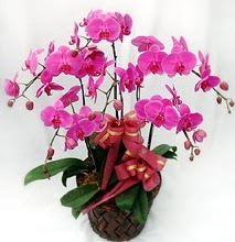 Sepet içerisinde 5 dallı lila orkide  Diyarbakır çiçek mağazası , çiçekçi adresleri