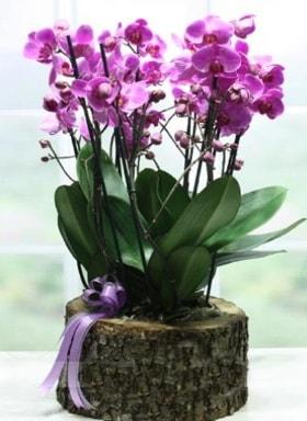 Kütük içerisinde 6 dallı mor orkide  Diyarbakır çiçek mağazası , çiçekçi adresleri
