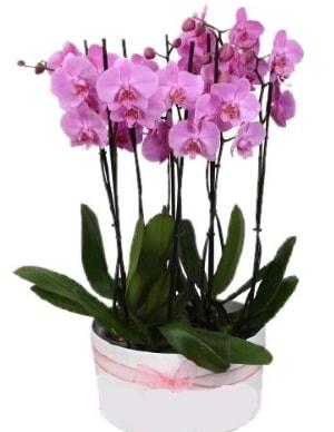 Beyaz seramik içerisinde 7 dallı mor orkide  Diyarbakır hediye sevgilime hediye çiçek